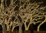 Trees_&_Xmas_lights_8